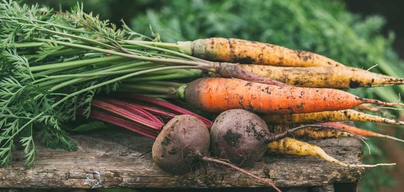 fructe-si-legume-pentru-marirea-sanilor
